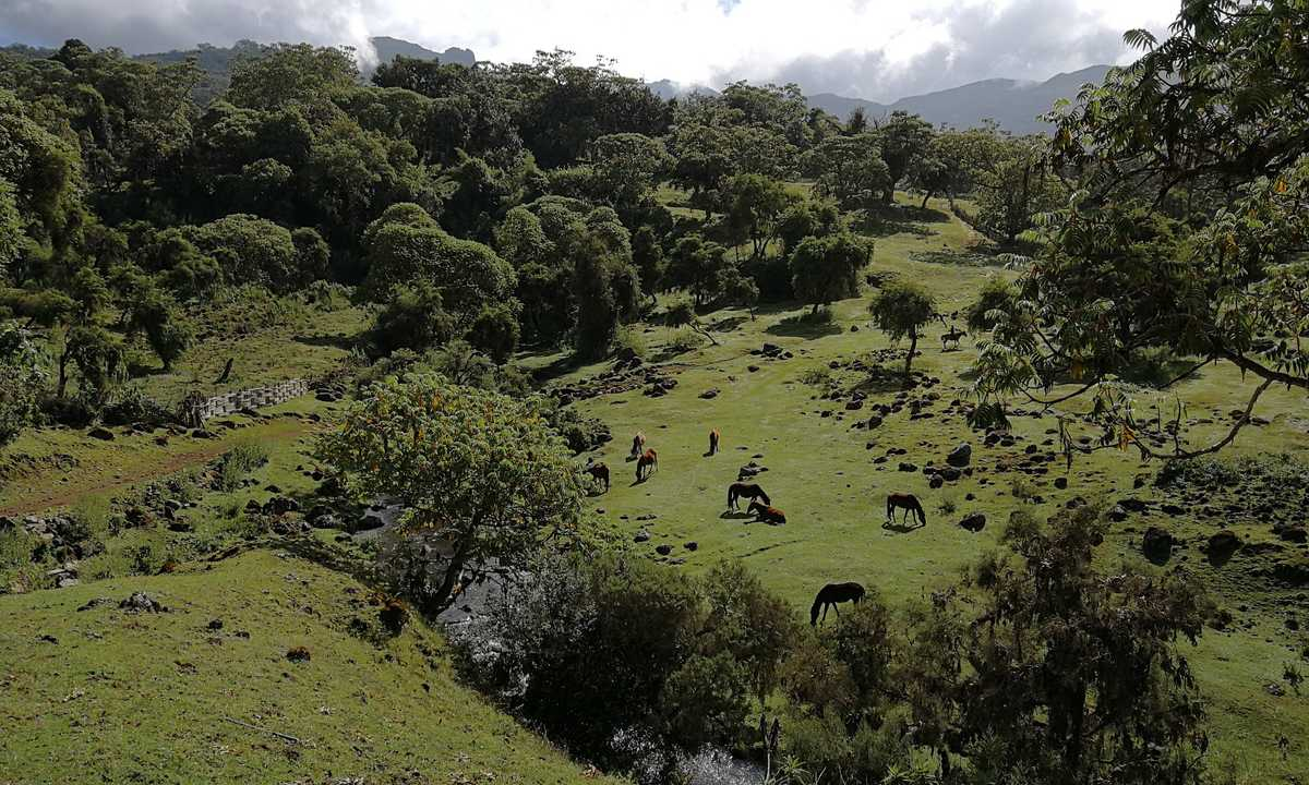 Harenna-Forest-Bale-Mountains-Marc-FAM