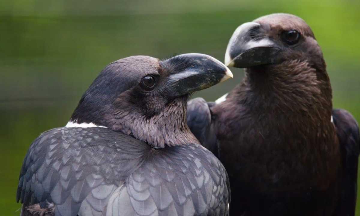 STE_5_Stewart_McPherson_ALL_birds