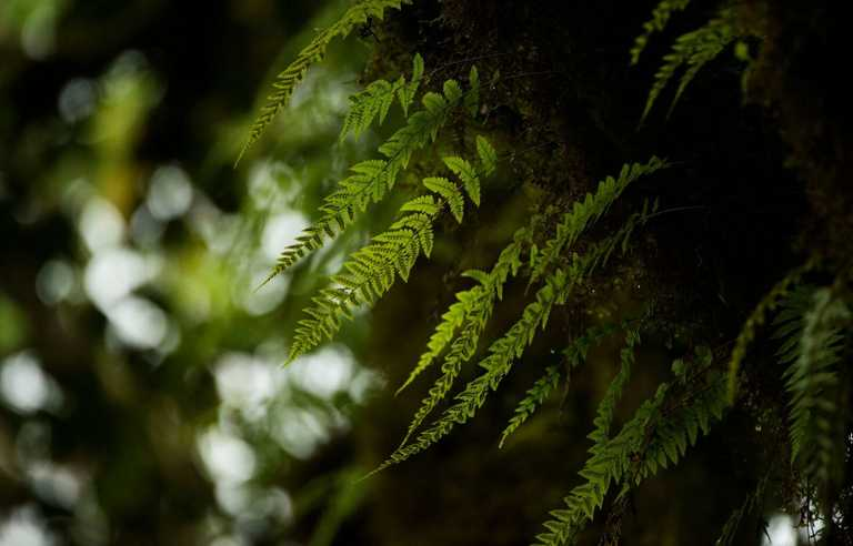 Bale-Lodge-Ferns