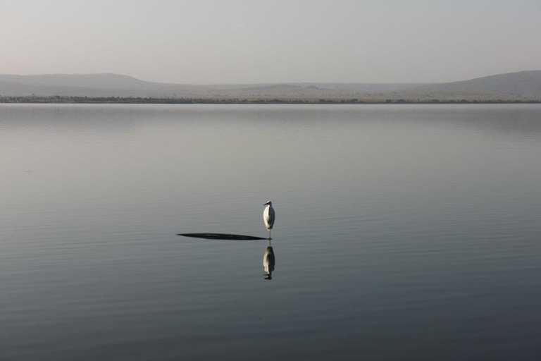Bird on Lake Awassa